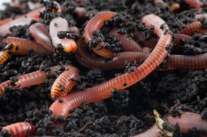 The Drs: Earthworm Poop Facial