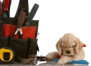 The Revolution: Dog Day
