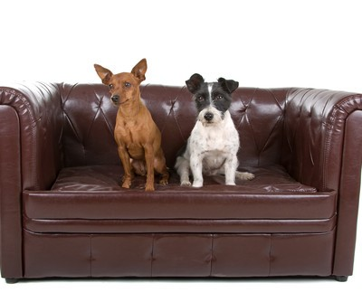 The Revolution: Dog Proof Living Room