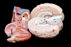 The Doctors: Healthy Vs Unhealthy Organs