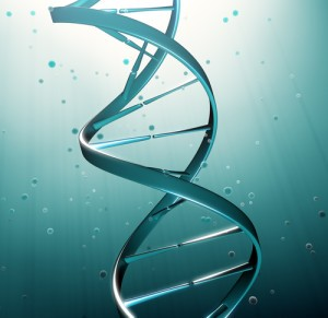 The Drs: Genetic Mapping