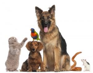 Ellen: Viral Animal Videos