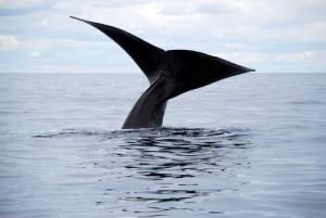 Ellen: Whale Rescue