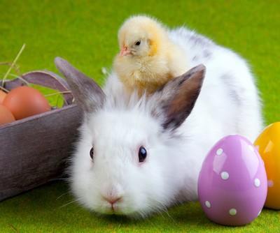 Ellen: Easter Photos