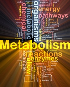 Dr Oz: Metabolism Boosters