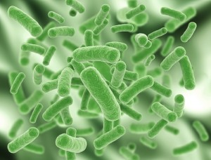 The Drs: Body Bacteria
