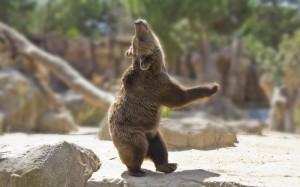 Ellen: Bear Dancing Video