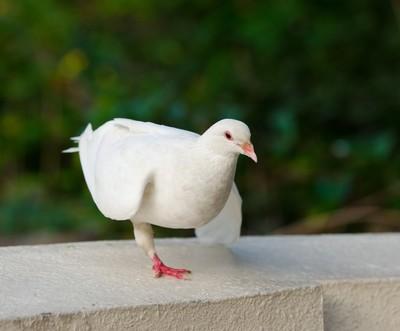 Ellen: Dancing Bird