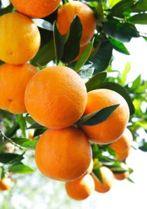 Dr Oz: Fiber in Oranges