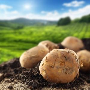 Potato Sunburn Remedy: Dr Oz Natural Remedies