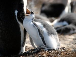 Super Animal Dads: Penguins