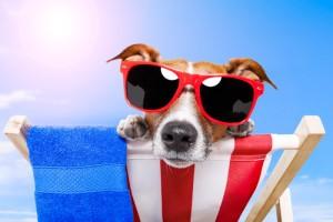 Dog Summer Survival Guide: Dr Oz