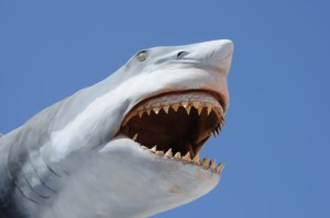 Kathie Lee & Hoda: Shark Attack