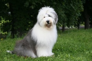 Seth Meyers English Sheepdogs: Live With Kelly