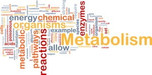 Dr Oz: Metabolism Power Plate