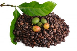 Green Coffee Bean Extract: Dr Oz July 30 2012 Recap