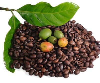 Green Coffee Bean Extract: Dr Oz July 30 2012 Recap