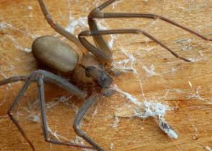 The Doctors: Brown Recluse Spider Infestation & Health Danger