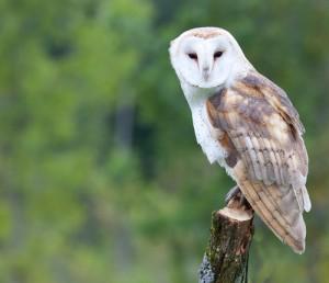 Good Morning America: Jack Hanna Barn Owl, Clouded Leopard, Lion Cub