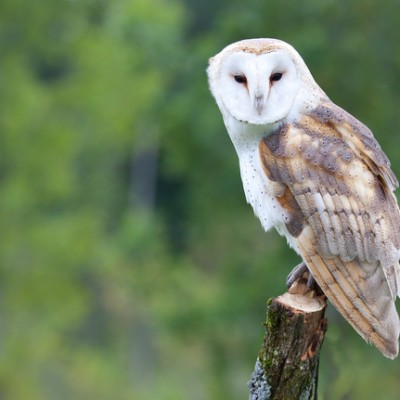 Good Morning America: Jack Hanna Barn Owl, Clouded Leopard, Lion Cub