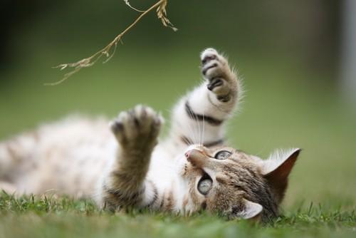 Sleepypod Cat Reviews