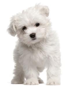 Kelly & Michael: Top Dog Names of 2012 & Men Vs. Women Chores