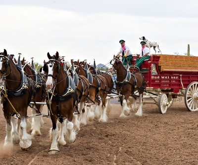 Kelly & Michael Football Frenzy: Live Anheuser-Busch Clydesdales