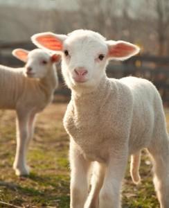 Ellen: Sophia Grace and Rosie At Gentle Barn & Adam Levine's Lip Balm