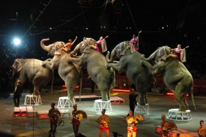 CBS: Ringling Bros Andre McClain & American Caddy At St. Andrews Book
