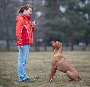 KLG & Hoda: Dog Training Advice, Housebreak a Puppy & How to Teach Sit