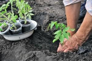Kathie Lee & Hoda: Outdoor Gardening Advice & Joy's Weight Loss Finale