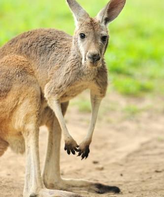 Ellen: Kai Meets Bruno Mars, Qantas Australian Know How & Boomerangs