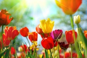 Today Show: Macy's Flower Show Preview & Best Time to Plant Bulbs