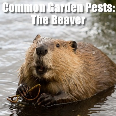 Today Show: Common Garden Animal Pests & Sev Gadget ...
