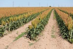 Kathie Lee & Hoda: Fertilizer Plant Explosion & Most Deserving Mom