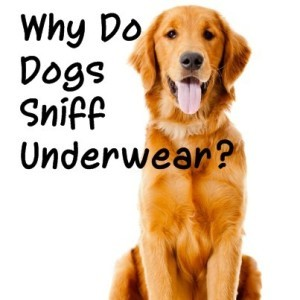 The Doctors: Canine Sense Of Smell & Why Do Dogs Sniff Underwear?