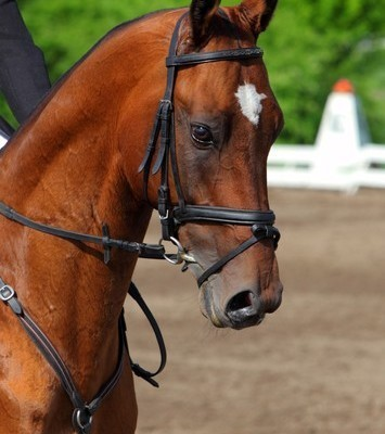 Today Show: Jill Smokler Parenting Advice & Race Horse Learns to Paint