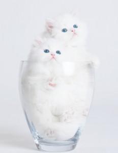 Ellen: Kitty In a Vase Video & Police Report Men Compare Facial Hair