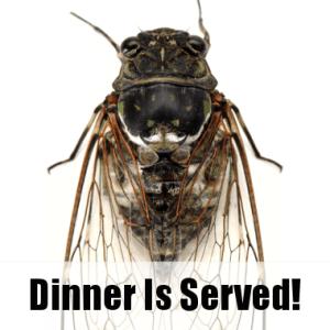 Live!: Chef Adding Cicadas to the Menu & Topless Golden Girl Portrait