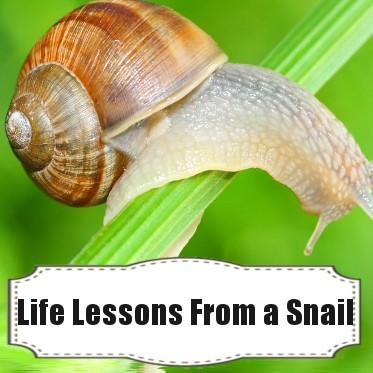 Ellen Learns Snail Life Lessons & Mommy Wins Mother's Day Giveaway
