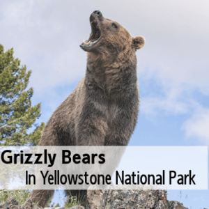 Today: Willie Geist Tracks Grizzly Bears With Tracker Casey Anderson