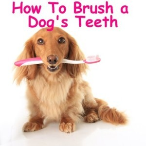 Today Show: Great Gatsby Fashion Ideas & How To Brush Your Dog's Teeth