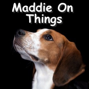 Today Show: Maddie On Things Review & Maddie the Coonhound On Twitter