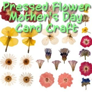 The Chew: Clinton Kelly's Pressed Flower Mother's Day Card Directions