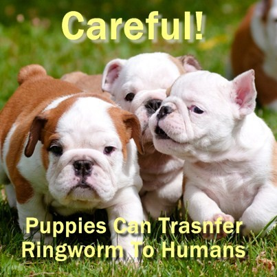 The Drs: What is a Cutaneous Horn & How to Prevent Ringworm in Puppies