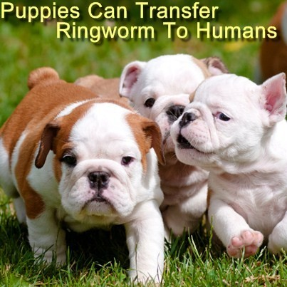 Can Ringworm Transfer From Dogs To Humans