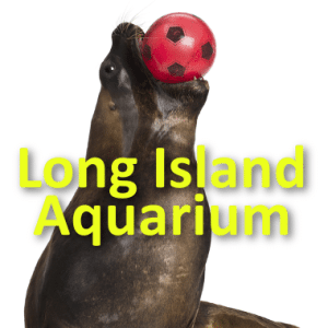 Kathie Lee & Hoda: Long Island Aquarium and Exhibition Center Review