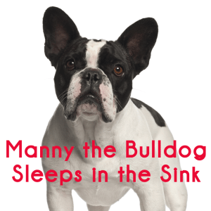 Steve Harvey: Manny the Bulldog Sleeps in Sink & Budget Summer Parties