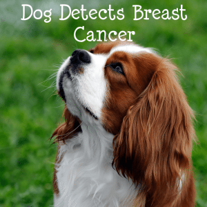 The Drs: King Charles Spaniel Detects Breast Cancer & Miracle Recovery