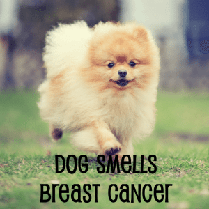 The Drs: Dog Detects Breast Cancer & Chili Powder Punishment Kills